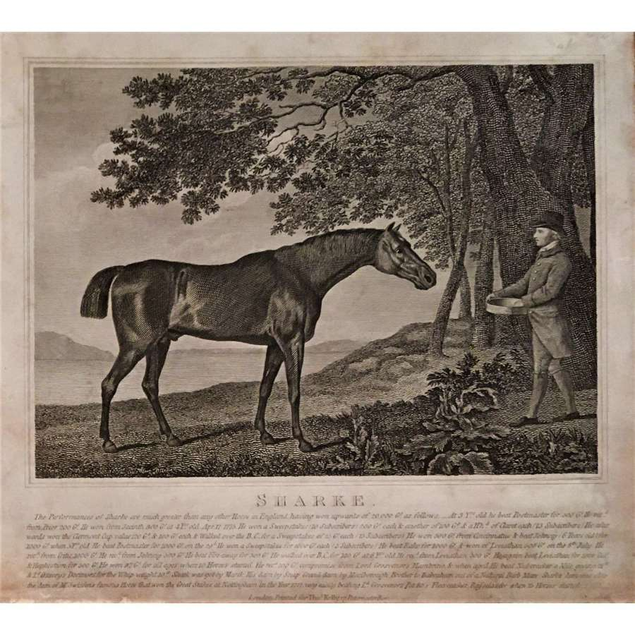 """An antique print of the famous 18th Century Racehorse """"Sharke"""